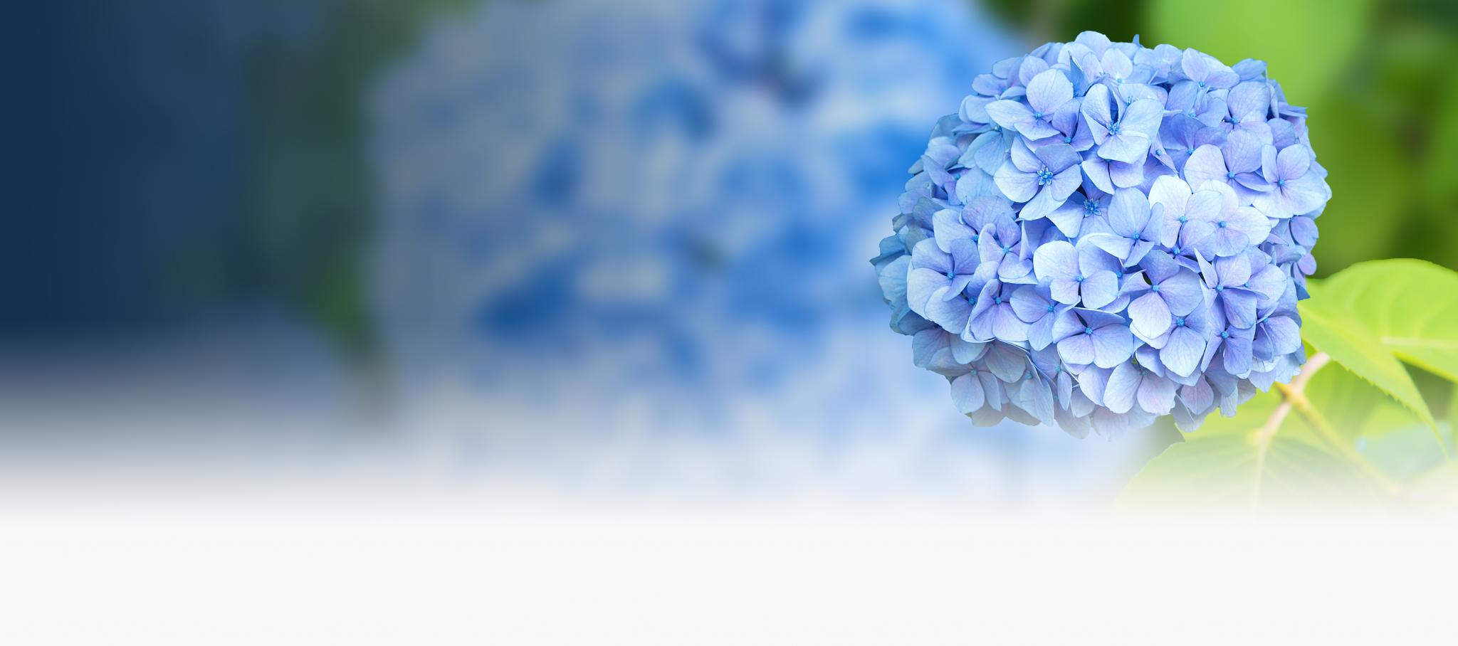 Bespoke design hydrangea