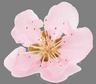 pink flower 01